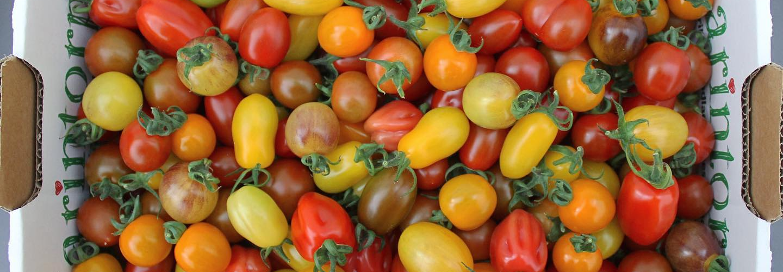 Karintorps tomater