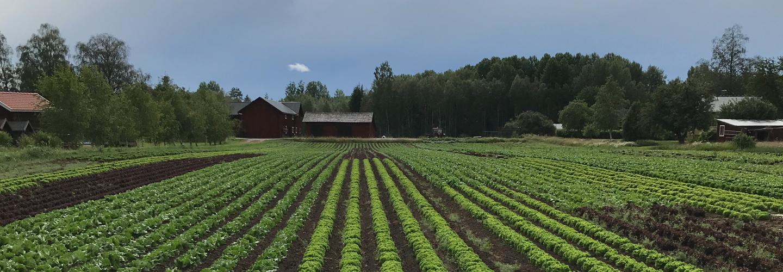 Wålstedts gård